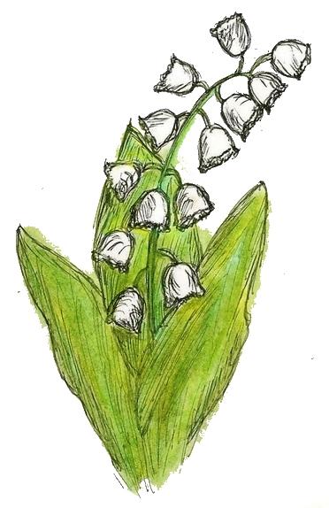 may day, muguet lily valley