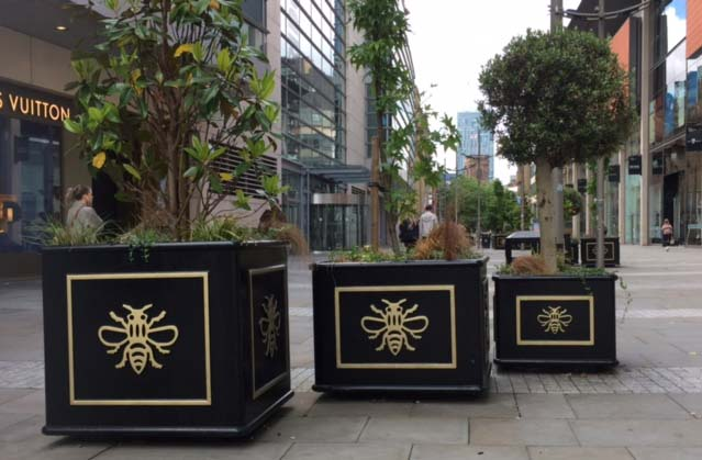 Manchester bees