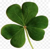 St Patrick's shamrock